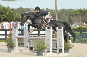 Balt'Amour AKA Balt'Amour JSF  approved stallion bred by Jump Start Farm
